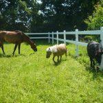 Ogrodzenia farmerskie na lata.